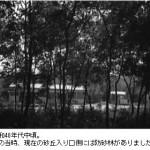 昭和40年代中頃。当時砂丘入口付近は防砂林でした。-鳥取砂丘らくだや