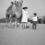 昭和30年代後半。初代らくだの『ニーナ』。-鳥取砂丘らくだや