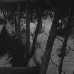 昭和40年代中頃。時代を感じさせる金網ですね。-鳥取砂丘らくだや
